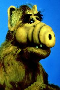 ALF - 8 x 10 Color Photo #1