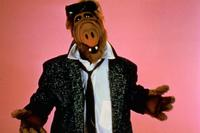ALF - 8 x 10 Color Photo #3