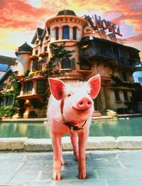 Babe: Pig in the City - 8 x 10 Color Photo #1