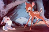 Bambi - 8 x 10 Color Photo #1