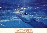 Barracuda - 11 x 14 Movie Poster - Style G