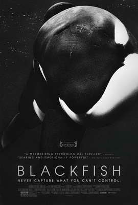 Blackfish - 27 x 40 Movie Poster - Style A