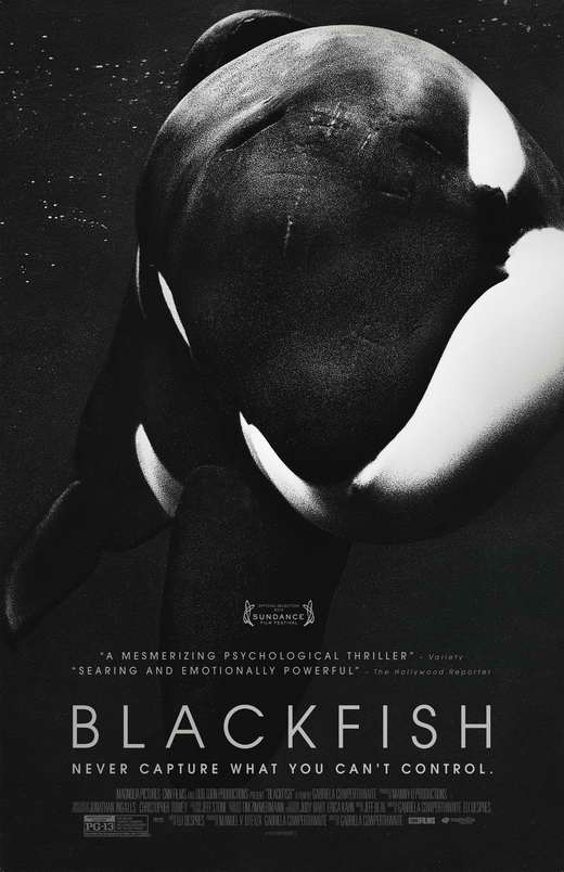 Blackfish Movie Posters From Movie Poster Shop