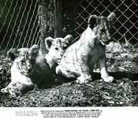 Born Free - 8 x 10 B&W Photo #10