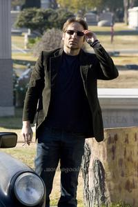 Californication (TV) - 8 x 10 Color Photo #003