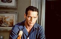 Cat on a Hot Tin Roof - 8 x 10 Color Photo #2