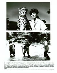 Cheetah and Friends - 8 x 10 B&W Photo #1