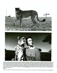 Cheetah and Friends - 8 x 10 B&W Photo #2