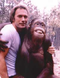 Clint Eastwood - 8 x 10 Color Photo #102
