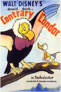 Contrary Condor - 43 x 62 Movie Poster - Bus Shelter Style A