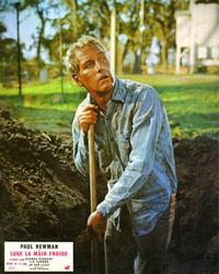 Cool Hand Luke - 8 x 10 Color Photo #9