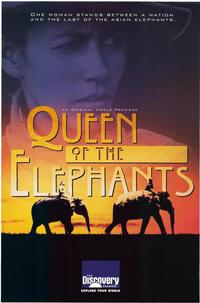 Discovery Channel:  Queen of the Elephants - 11 x 17 Movie Poster - Style A