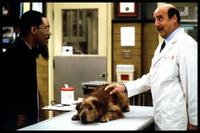 Dr. Dolittle - 8 x 10 Color Photo #10