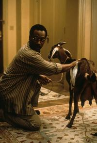 Dr. Dolittle - 8 x 10 Color Photo #15
