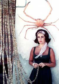 Elizabeth Taylor - 8 x 10 Color Photo #105