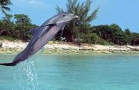 Flipper - 8 x 10 Color Photo #1