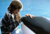 Free Willy - 8 x 10 Color Photo #1