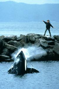Free Willy - 8 x 10 Color Photo #2