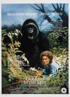 Gorillas in the Mist - 11 x 17 Movie Poster - Belgian Style A