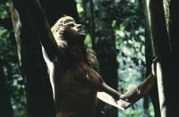 Greystoke: The Legend of Tarzan, Lord of the Apes - 8 x 10 Color Photo #10