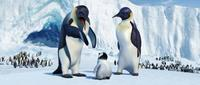 Happy Feet - 8 x 10 Color Photo #1
