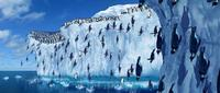 Happy Feet - 8 x 10 Color Photo #11