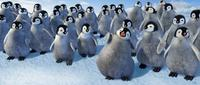 Happy Feet - 8 x 10 Color Photo #15