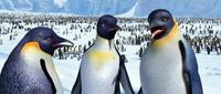 Happy Feet - 8 x 10 Color Photo #16