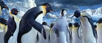 Happy Feet - 8 x 10 Color Photo #19