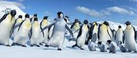Happy Feet - 8 x 10 Color Photo #22