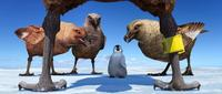 Happy Feet - 8 x 10 Color Photo #23