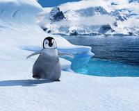 Happy Feet - 8 x 10 Color Photo #38