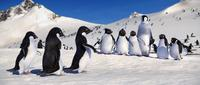 Happy Feet - 8 x 10 Color Photo #39
