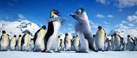 Happy Feet - 8 x 10 Color Photo #40