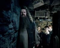 Harry Potter and the Order of the Phoenix - 8 x 10 Color Photo #48