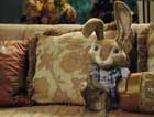 Hop - 8 x 10 Color Photo #15