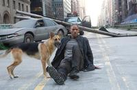 I Am Legend - 8 x 10 Color Photo #2