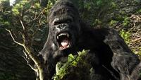 King Kong - 8 x 10 Color Photo #13