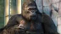 King Kong - 8 x 10 Color Photo #26