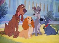 Lady and the Tramp - 8 x 10 Color Photo #1