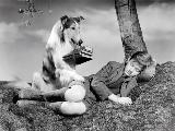 Lassie, Come Home - 8 x 10 B&W Photo #4