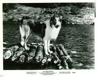 Lassie's Great Adventure - 8 x 10 B&W Photo #1