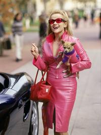 Legally Blonde - 8 x 10 Color Photo #18