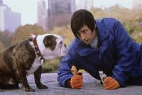 Little Nicky - 8 x 10 Color Photo #4