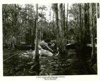 Lure of the Wilderness - 8 x 10 B&W Photo #4