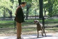 Maid In Manhattan - 8 x 10 Color Photo #14
