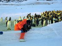 March of the Penguins - 8 x 10 Color Photo #7