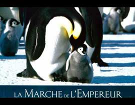 March of the Penguins - 11 x 14 Poster French Style E