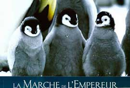 March of the Penguins - 11 x 14 Poster French Style F