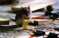 Mouse Hunt - 8 x 10 Color Photo #2